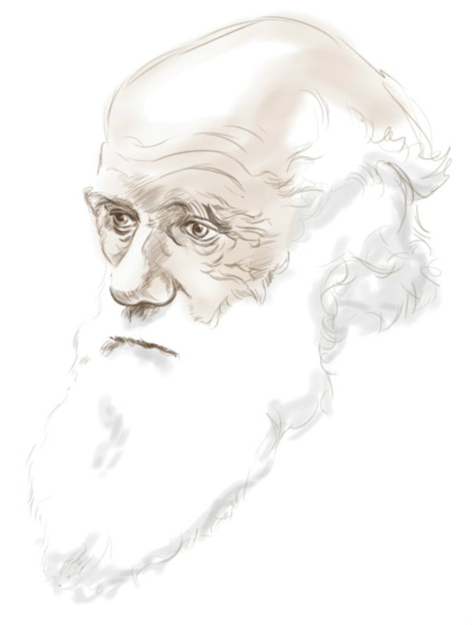 darwin_sketch_by_crawford_hazle-d39kj8s2